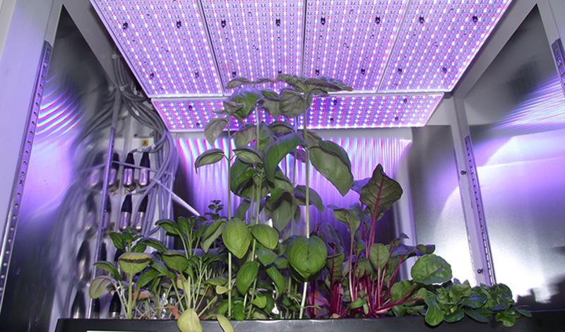 wochenchronik pflanzenforschung und botanik 40 2015. Black Bedroom Furniture Sets. Home Design Ideas